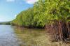 Китай представи план за опазване на мангровите гори
