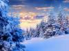 В хармония с природата през зимата