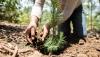 Горите в Китай ще се разширят през идните пет години