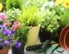 Как да отглеждаме екзотични билки у дома?